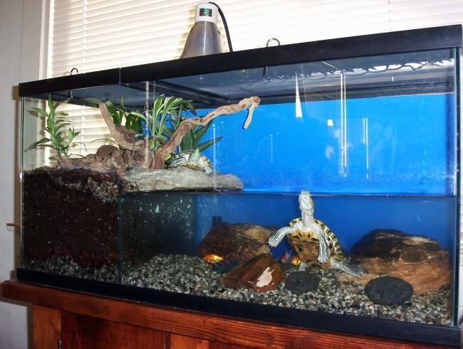 Запуск Красноухих черепах в аквариум с растючкой