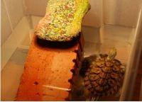 Островок для черепахи своими руками16