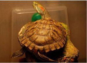 Островок для черепахи своими руками18