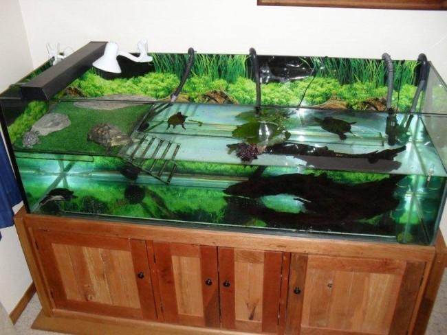 Удачное оформление аквариума для черепахи.