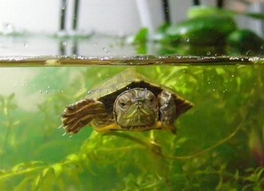 как оборудовать террариум для сухопутной среднеазиатской черепах