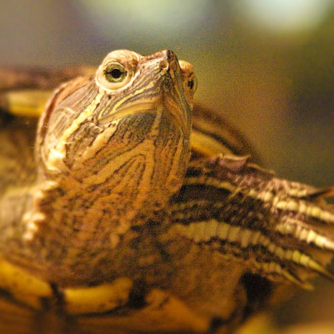 как сделать аквариум для черепахи