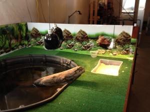 Аквариум для красноухих черепах