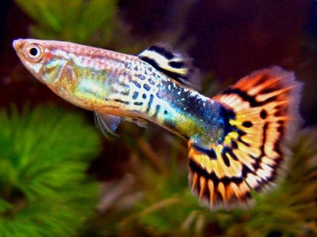 Рыбки из рук в руки дорогие
