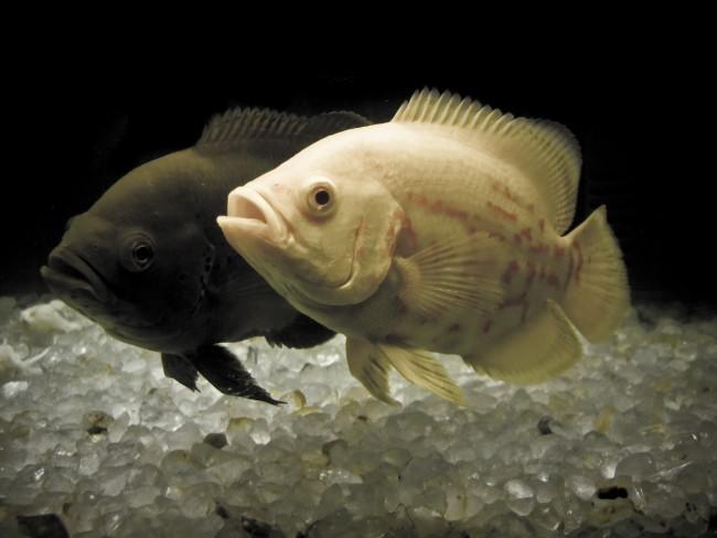 65Рыбки в аквариум своими руками