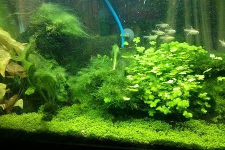 аквариумы с водорослями фото