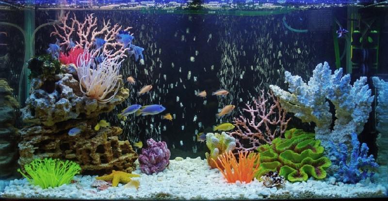 Дизайны аквариумов-фото