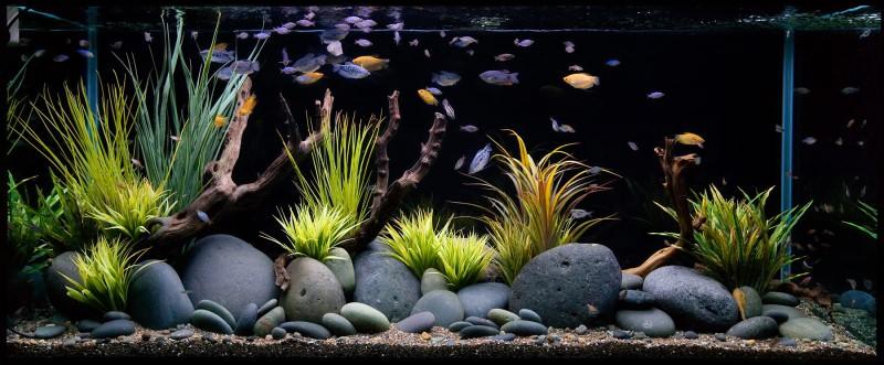 Укрытие в аквариум своими руками