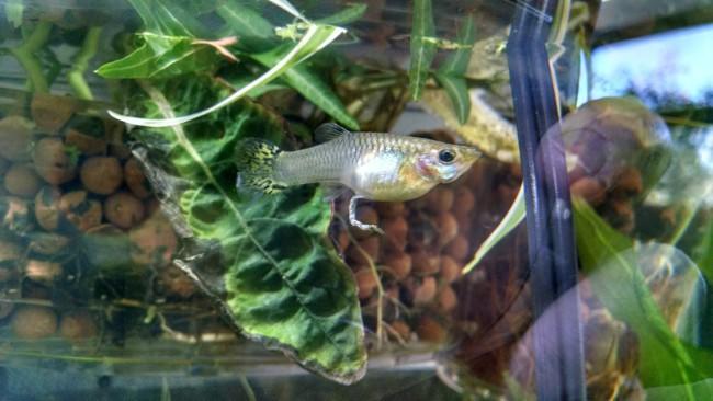 Райффайзенбанка Череповце дохнут рыбы в аквариуме сайта несет