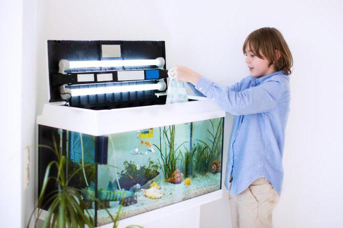 Как ухаживать за рыбами в аквариуме инструкция