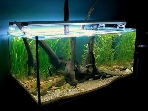 аквариумов корягами фото оформление