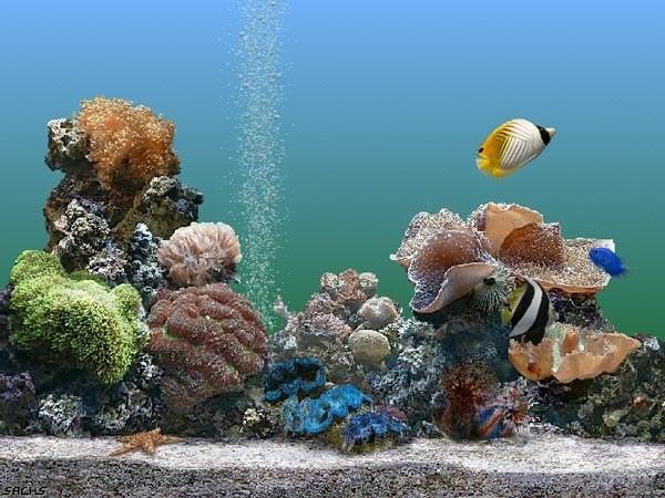 Как подобрать рыбок в аквариум