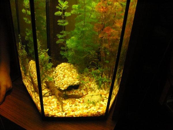 Грот в аквариум своими руками из пенопласта 45