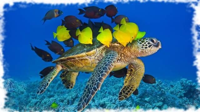 черепахи и рыбки