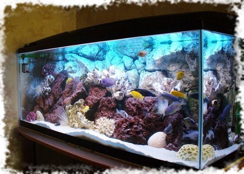 Где заказать изготовление аквариумов под заказ?