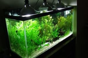Стерилизатор для аквариума своими руками фото 135