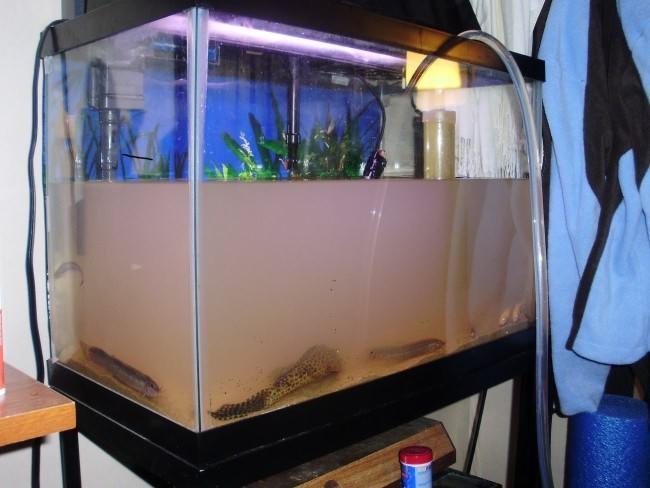 почему в аквариуме мутная вода с фильтром