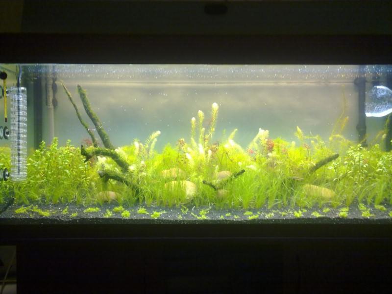SPAIO запуск аквариума с растениями видео ваши вещи радуют