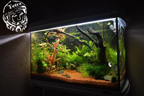 Запуск аквариума с растениями пошаговая инструкция.